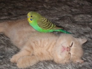 kitten_and_bird
